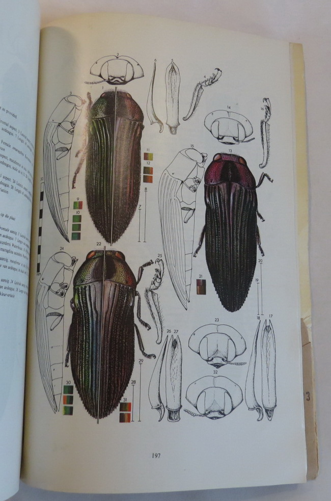 Image for Monograph of the genus Acmaeodera Eschscholtz (Coleoptera: Buprestidae) of Africa south of the Sahara. Republic of South Africa - Department of Agricultural Technical Services - Entomology Memoir No. 47