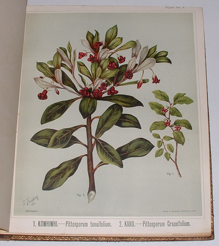 Image for The Art Album of New Zealand Flora