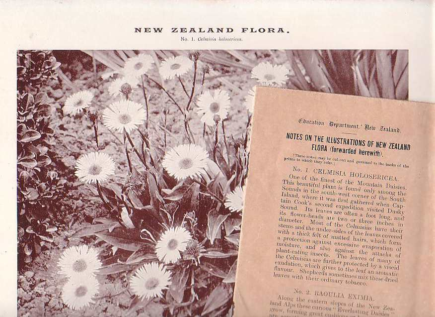 Image for Illustrations of New Zealand Flora